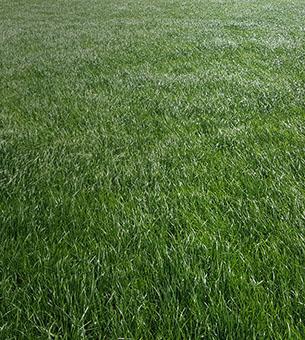 good-grass-image